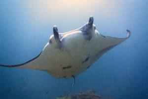 バリ島 ダイビング マンタ インドネシア ヤルネシアン