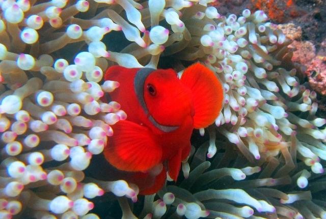 バリ島 ダイビングスポット インドネシア ヤルネシアン