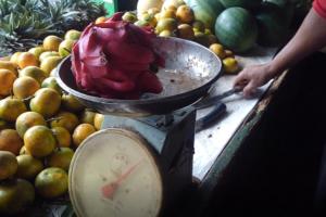 ドラゴンフルーツ ジャカルタ インドネシア