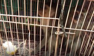 jakarta monkey